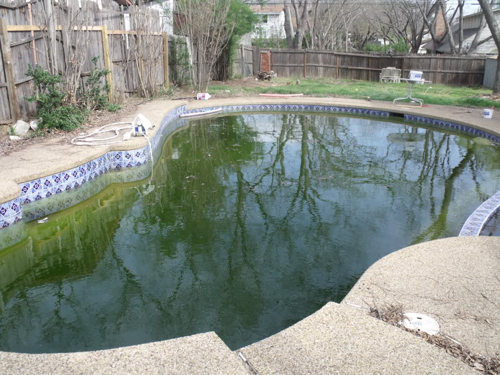 Swampy pool clean up - Zagers Blog